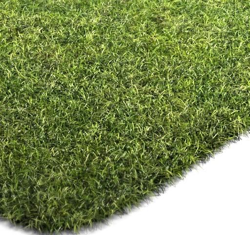 VRay Grass Study